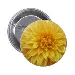 Flor amarilla de la dalia pins