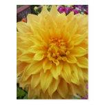 Flor amarilla de la dalia postal