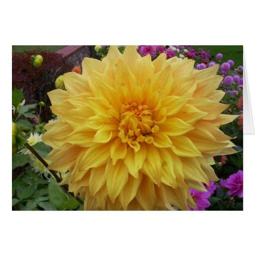 Flor amarilla de la dalia tarjeta