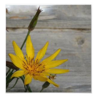 Flor amarilla de la estrella arte fotografico