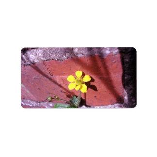 Flor amarilla de la mala hierba etiqueta de dirección