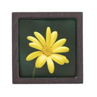 Flor amarilla de la margarita caja de joyas de calidad