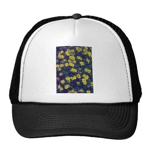 flor amarilla de la margarita de Dahlberg (Dyssodi Gorras De Camionero
