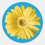 Flor amarilla de la margarita del Gerbera Etiquetas Redondas