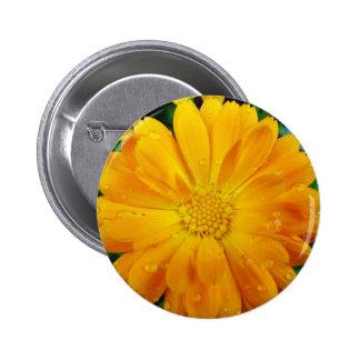 flor amarilla de la margarita del gerbera pin