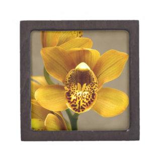 Flor amarilla de la orquídea cajas de regalo de calidad
