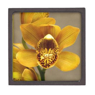Flor amarilla de la orquídea caja de regalo de calidad