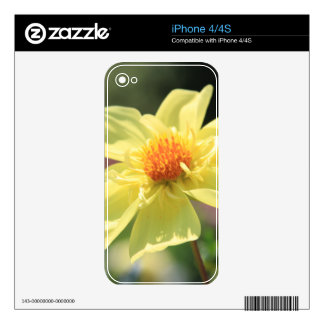 Flor amarilla de la primavera skins para iPhone 4