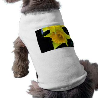 Flor amarilla de los narcisos en fondo oscuro camisa de perrito