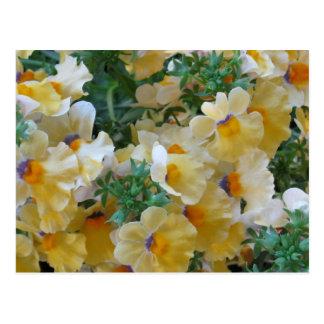 Flor amarilla de Nemesia Tarjetas Postales