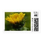 Flor amarilla de Sun Sellos