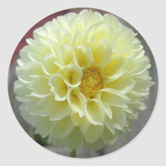 Flor amarilla del ángulo de la dalia pegatina redonda