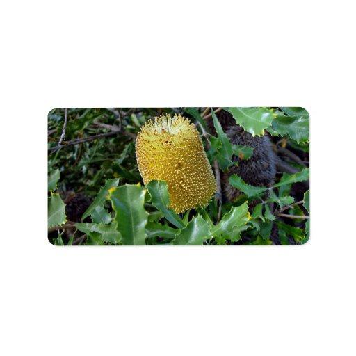 Flor amarilla del banksia etiquetas de dirección