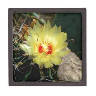 Flor amarilla del cactus del anzuelo caja de regalo de calidad