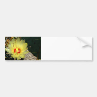 Flor amarilla del cactus del anzuelo etiqueta de parachoque