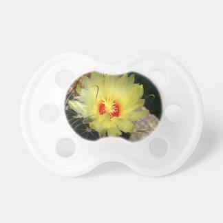 Flor amarilla del cactus del anzuelo chupete de bebe
