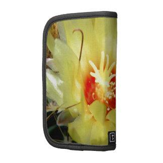 Flor amarilla del cactus del anzuelo organizadores