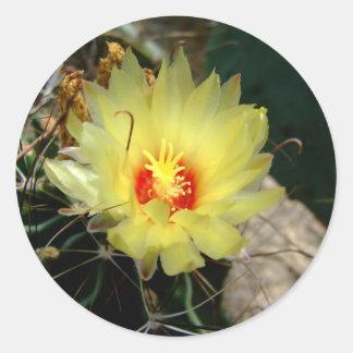 Flor amarilla del cactus del anzuelo pegatinas redondas