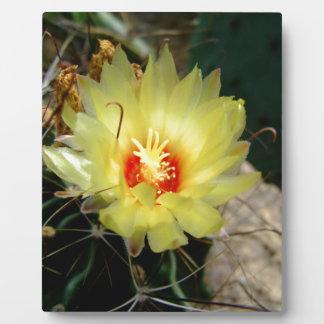 Flor amarilla del cactus del anzuelo placas con foto