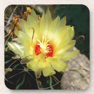 Flor amarilla del cactus del anzuelo posavasos