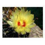 Flor amarilla del cactus del anzuelo postales