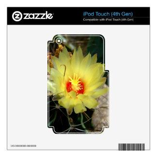 Flor amarilla del cactus del anzuelo calcomanías para iPod touch 4G