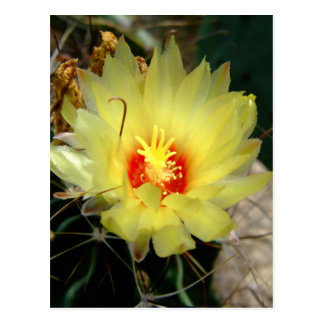 Flor amarilla del cactus del anzuelo postal
