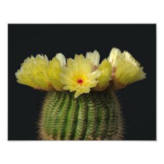 Flor amarilla del cactus fotografía