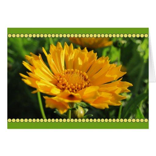 Flor amarilla del Coreopsis Tarjeton