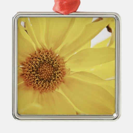 Flor amarilla del crisantemo ornamento de reyes magos