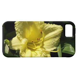 Flor amarilla del Daylily: Hemerocallis iPhone 5 Case-Mate Carcasas