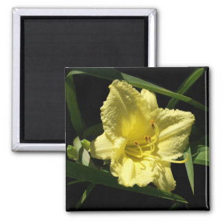 Flor amarilla del Daylily Imán De Frigorífico