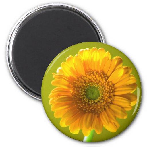 Flor amarilla del Gerbera de la margarita Imán Redondo 5 Cm