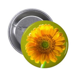 Flor amarilla del Gerbera de la margarita Pin