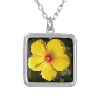 Flor amarilla del hibisco collar plateado