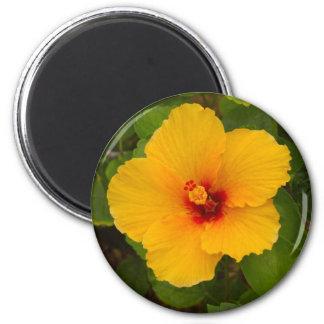 Flor amarilla del hibisco imán redondo 5 cm