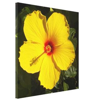 Flor amarilla del hibisco impresión en lienzo
