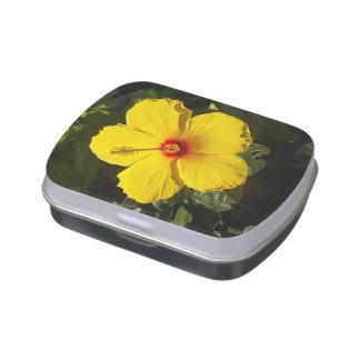 Flor amarilla del hibisco latas de dulces