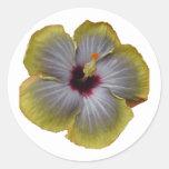 flor amarilla del hibisco pegatina redonda