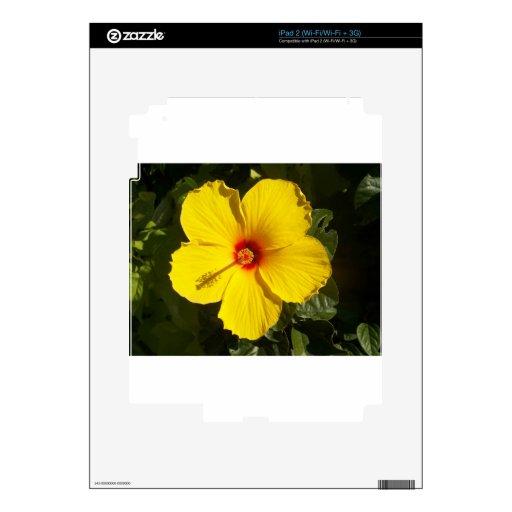 Flor amarilla del hibisco skins para iPad 2