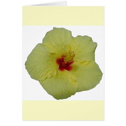 flor amarilla del hibisco tarjetas