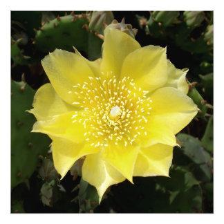 Flor amarilla del higo chumbo del cactus fotografía