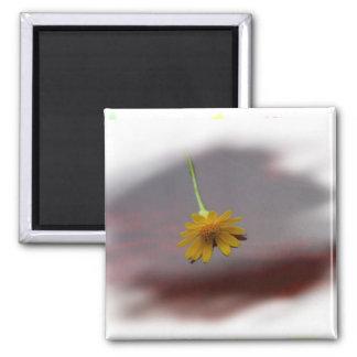 Flor amarilla en la fotografía roja del fondo imán cuadrado