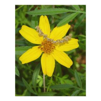 """Flor amarilla en la hierba folleto 8.5"""" x 11"""""""