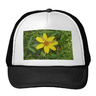 Flor amarilla en la hierba gorras