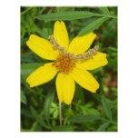 Flor amarilla en la hierba membretes personalizados