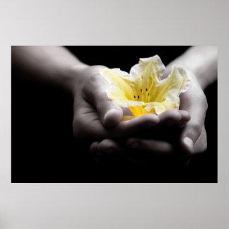 Flor amarilla en manos poster