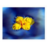 Flor amarilla encima de las aguas azules postal