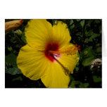 Flor amarilla felicitaciones