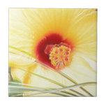 Flor amarilla floreciente magnífica azulejo ceramica